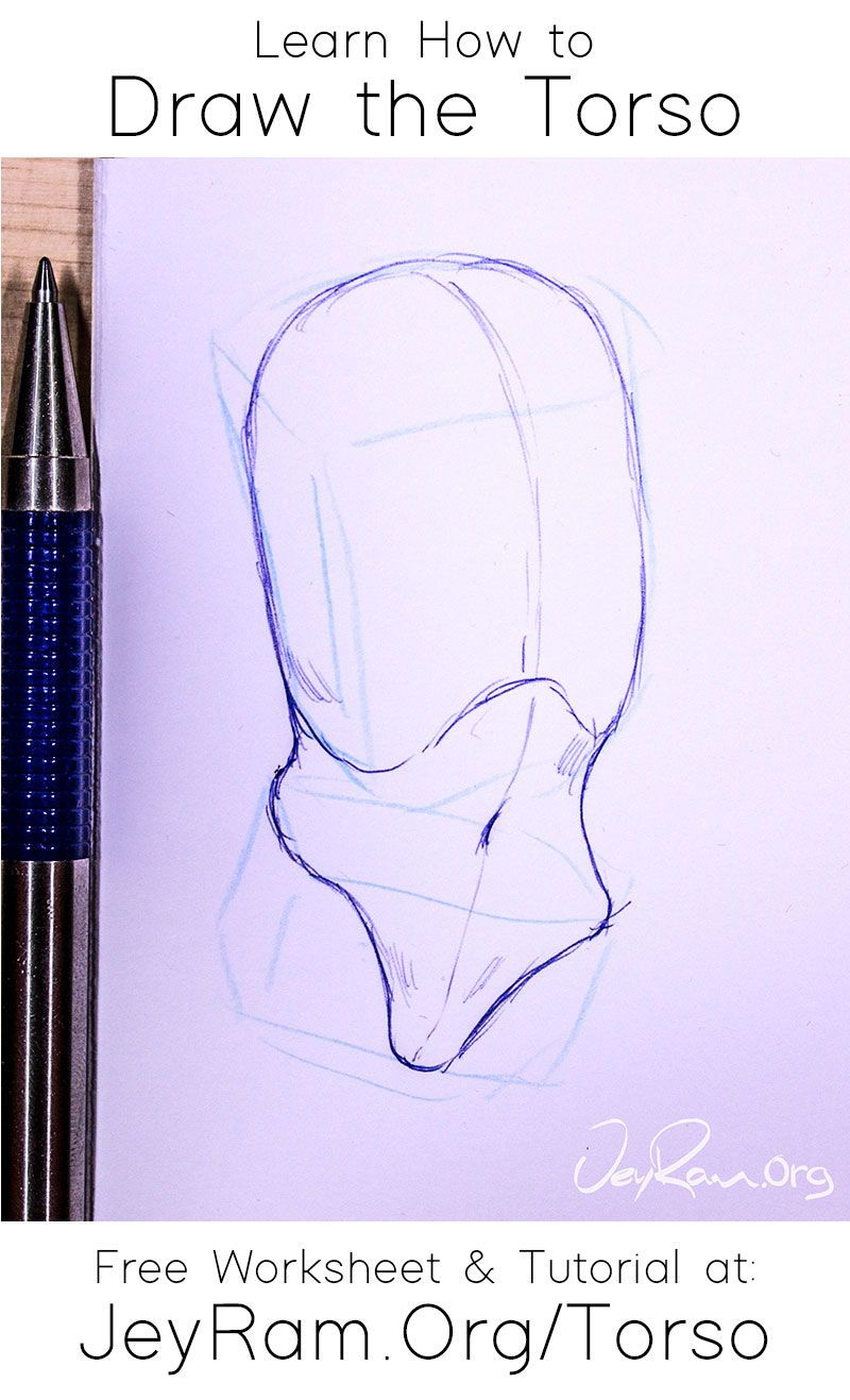 How To Draw The Torso Free Worksheet Tutorial In 2020 Tutorial Torso Learn To Draw