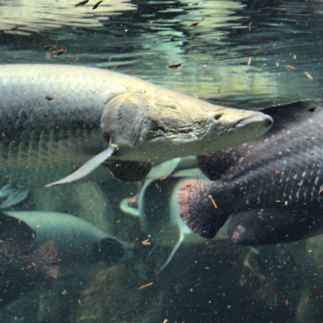 Fische teich zooleipzig zoo leipzig pflanzen und for Zierfisch teich