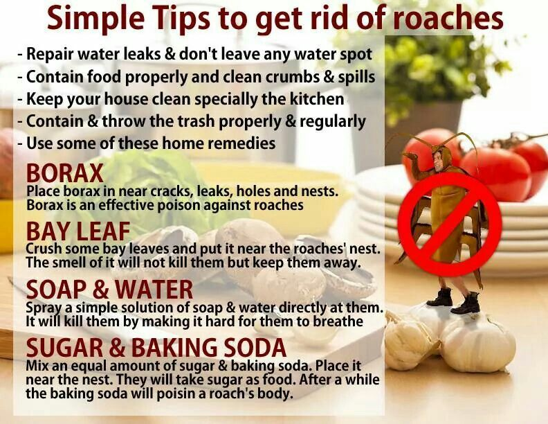 Get rid of roaches good housekeeping clean house