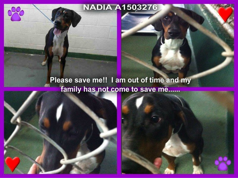 Urgent Miami Dade Animal Control 305 884 1101 3 Yr Old Female Nadia She Is Very Urgent Please Save Her Animal Abuse Awareness Animals Animal Groups