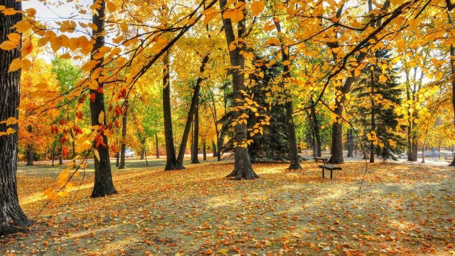 Beautiful Yellow Trees Park Wallpaper Hd Download Free Yellow Tree Tree White Birch Trees
