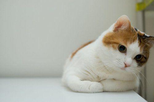 What A Face Cute Cat Wallpaper Funny Cat Wallpaper Cat Wallpaper