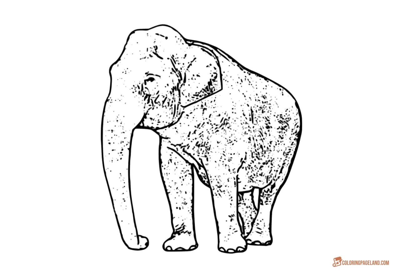 Coloring Pages Of Elephants Download And Print For Free Elephant Coloring Page Animal Coloring Pages Cartoon Elephant Drawing