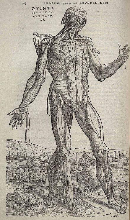 06.1 De humani corporis fábrica. 1543. Andrés Versalio.