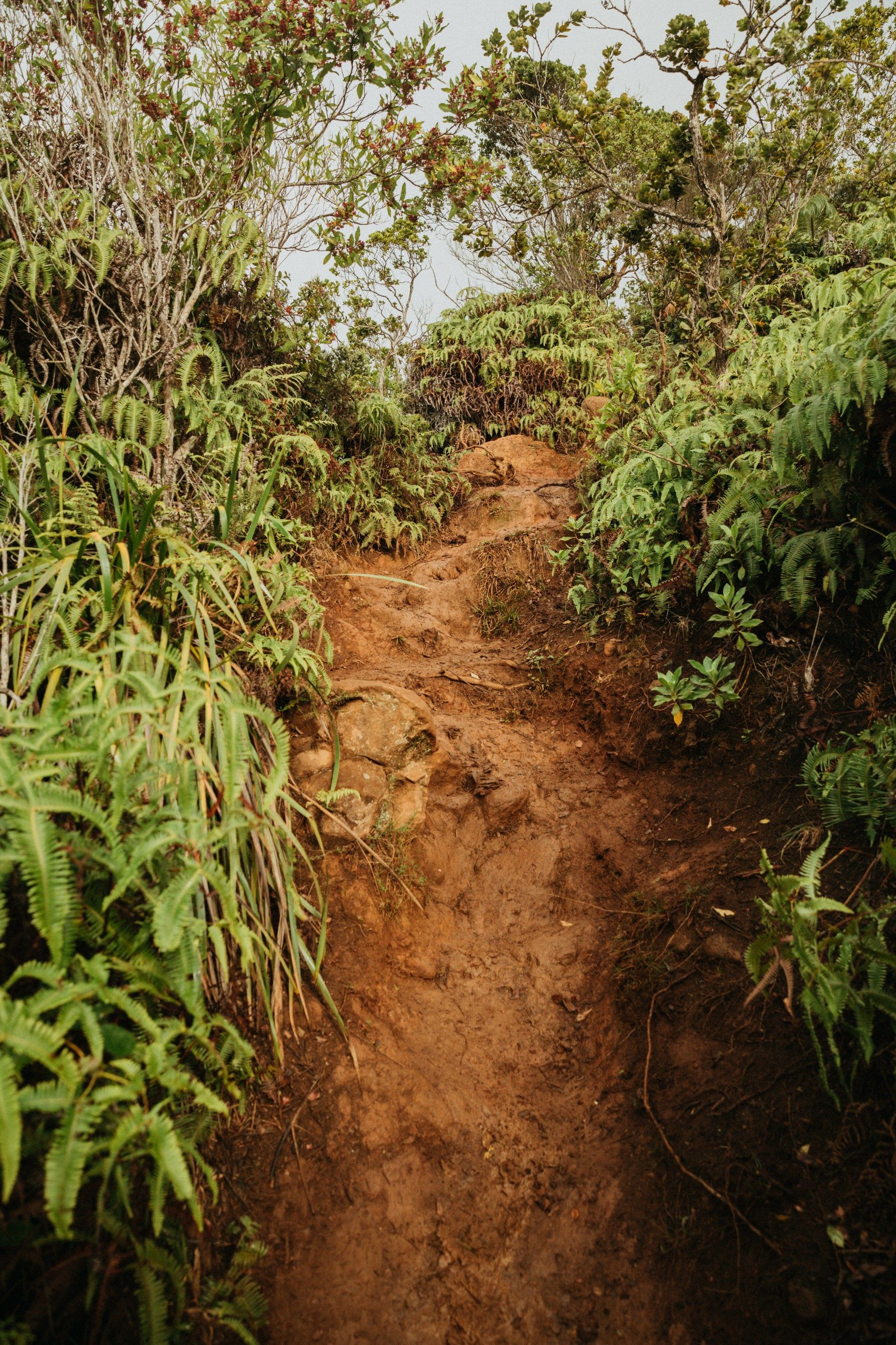 25 onceinalifetime things to do in kauai 7 day