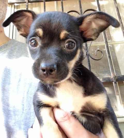 Chipin Dog For Adoption In Griffin Ga Adn 521062 On Puppyfinder