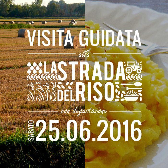 Passeggiata nella terra del riso a Milano 25 giugno Milano