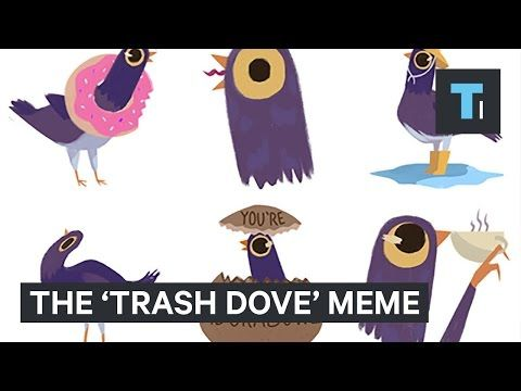 Tech Insider The Trash Dove Has Become One Of The Hottest Memes