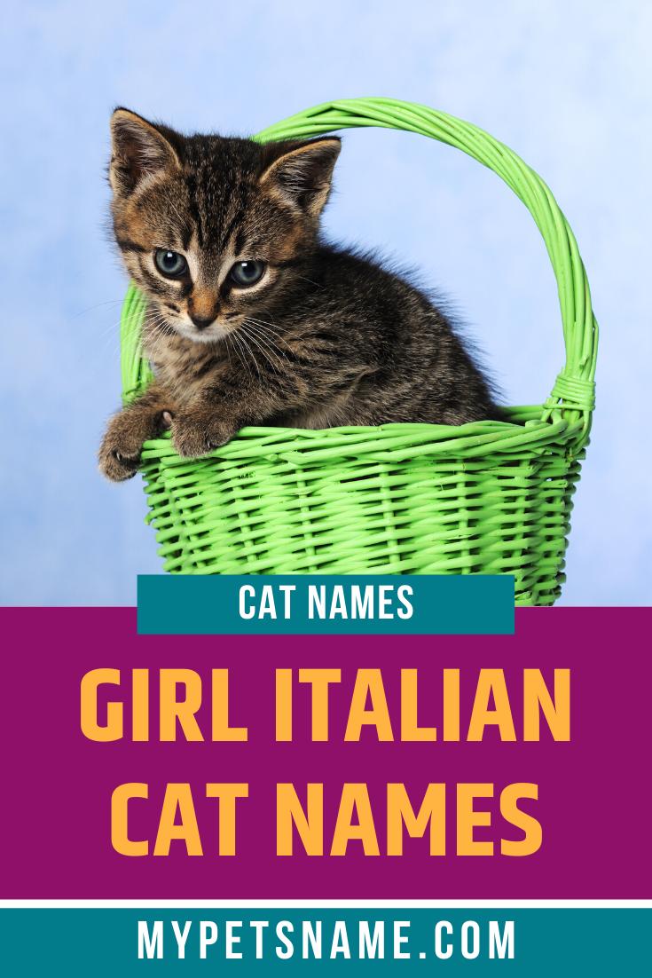 Girl Italian Cat Names In 2020 Cat Names Girl Cat Names Girl Pet Names