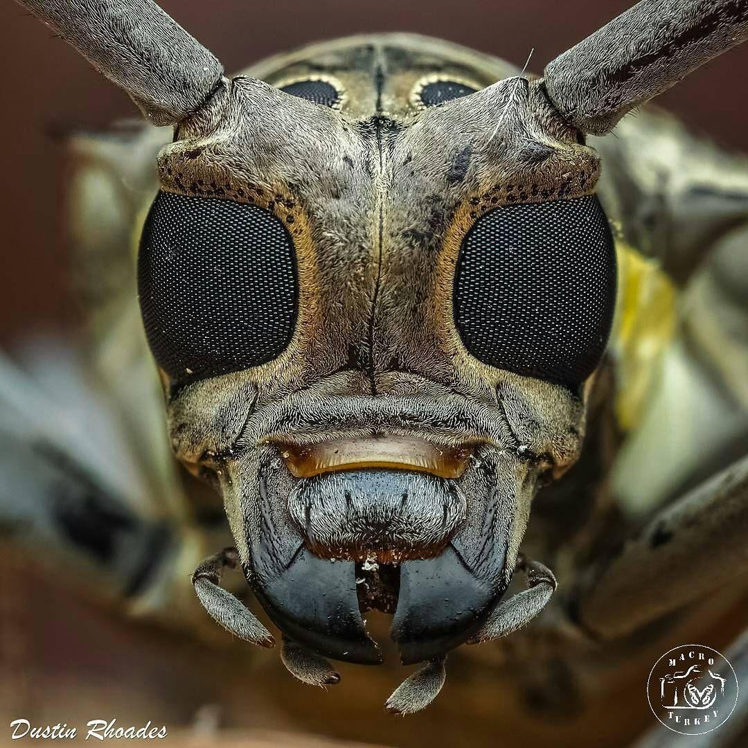 Pingl Par Haj Beinroth Sur Flora Fauna Pinterest Insectes  # Recherche Nilo A Vendre
