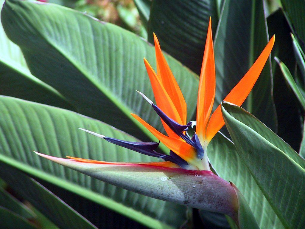 تعرف على أصغر هاتف أندرويد في العالم Birds Of Paradise Flower Birds Of Paradise Tropical Illustration