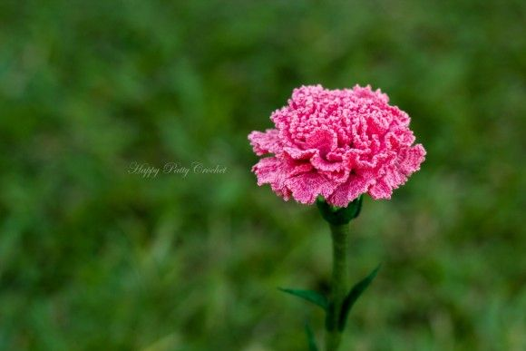 Carnation carnation flower patterns and month flowers carnation ccuart Gallery