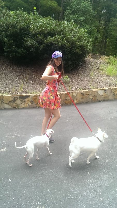 d9a3e2df96b02 Sarah Jordan walking Roo and Moe Pet Sitting Business, Dog Recipes, Big  Love,