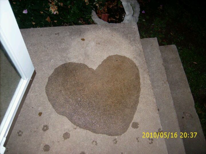 Myles made me a pee heart for real Outdoor decor, Decor