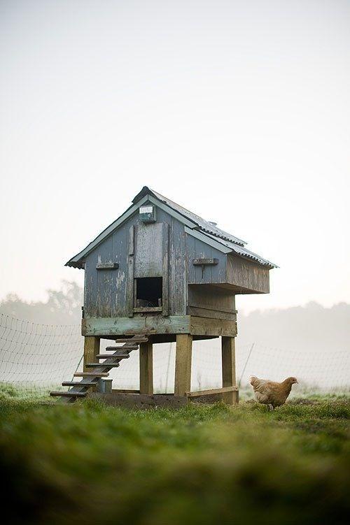 Un Poulailler Fait Maison Poulailler Poulets De Basse Cour Idees Jardin