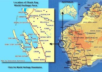 Shark bay western australia dugong territory places ive been shark bay western australia dugong territory gumiabroncs Image collections