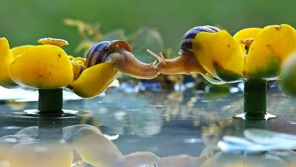 kissing snails #microcosmos