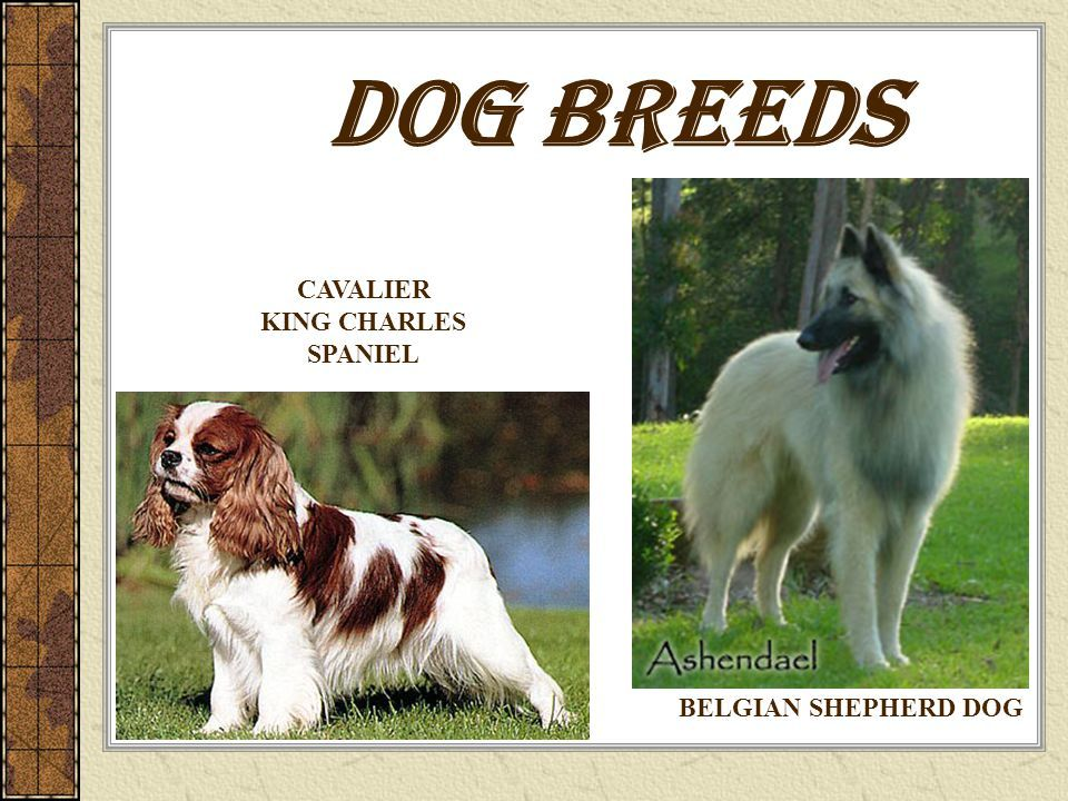 Dog Breeds Source Free on Public Domain Dog breeds