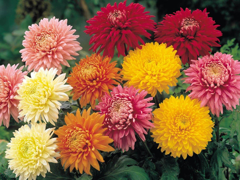 Portal Dedicado A La Decoracion De Espacios Para Toda La Familia Plantas De Invierno Tipos De Flores Flores Bonitas