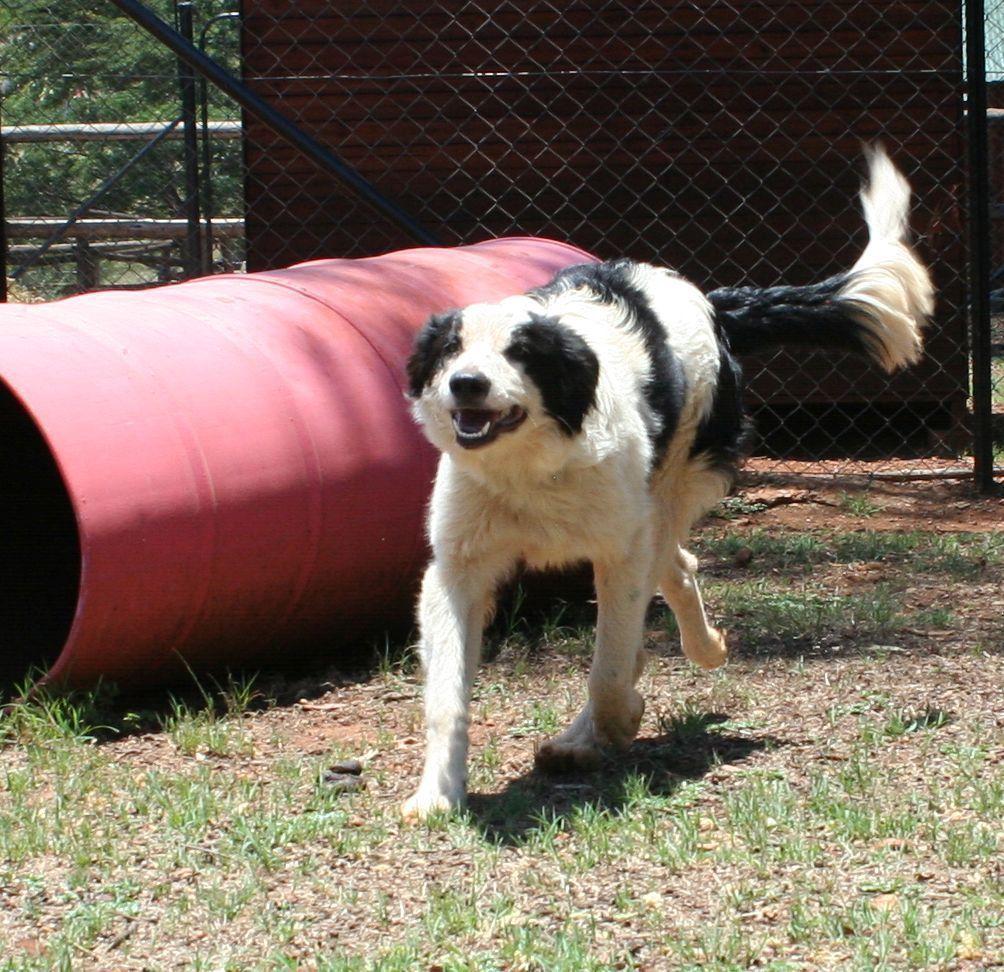 Pet Directory promoting Pet Adoption in South Africa   ADOPT ADOPT