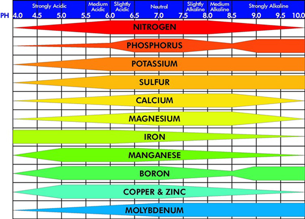acccd72f6c654fde104d6c9e4d245c1b - How Does Ph Affect Plant Growth And Gardeners Gardens