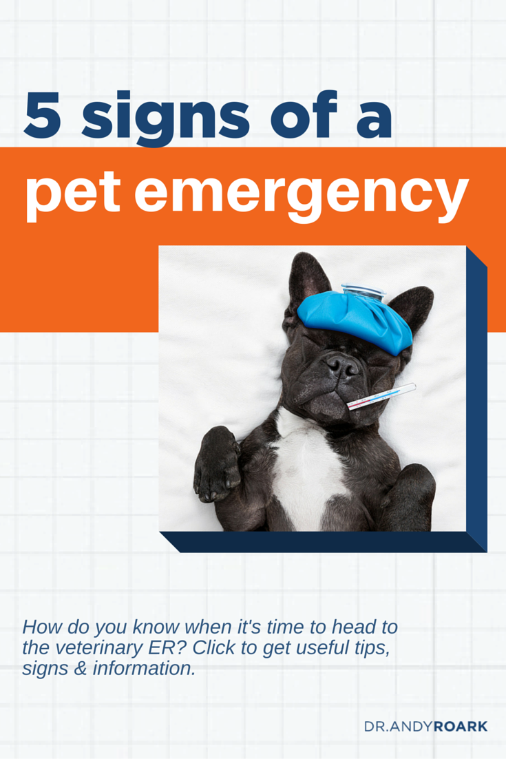Is it time to bring your pet to the emergency vet