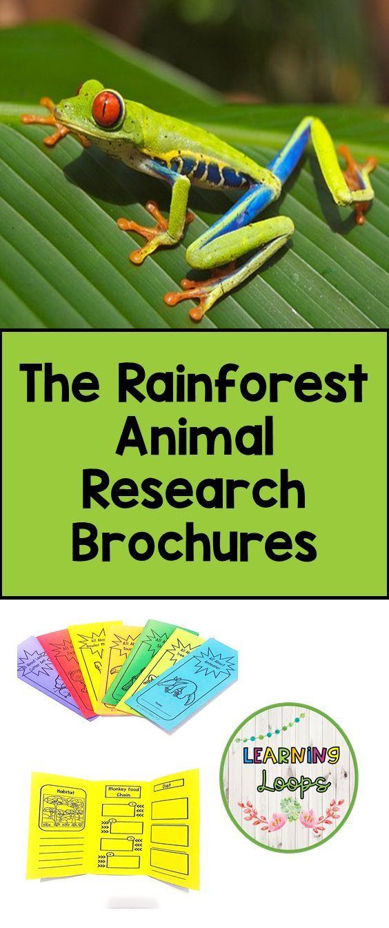 The Rainforest Animal Research Brochures Rainforest