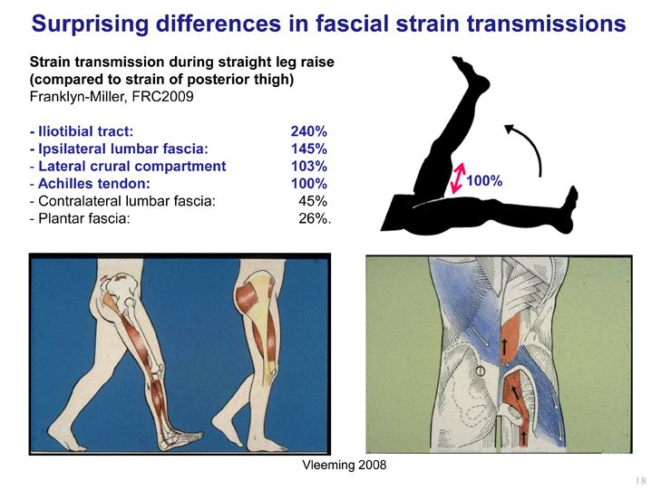Interesting Facts About Fascial Strain Transmission Fascia And