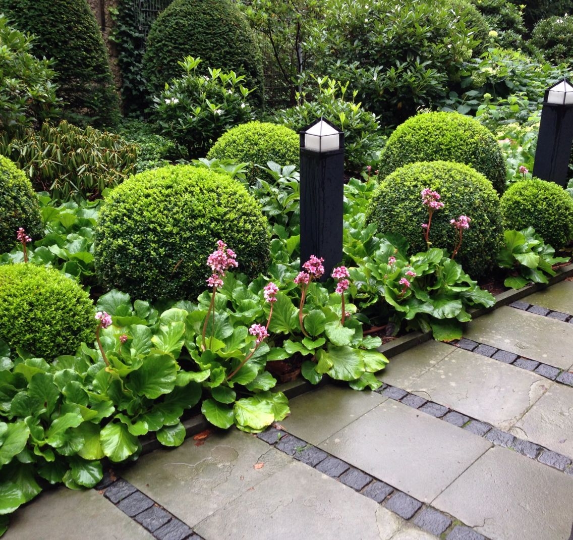 ideas about Buxus on Pinterest Buxus Sempervirens