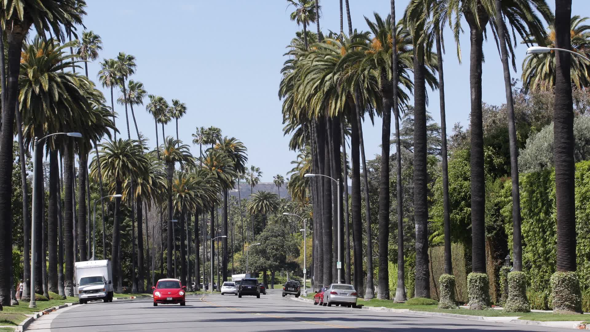 Palm Trees Car Traffic In Beverly Hills Near Sunset Boulevard Los Angeles Usa Stock Footage Traffic Beverly Hills Pa Palm Trees Stock Footage Beverly Hills