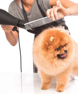 How To Dry A Dog After Bathing Towel And Hairdryer Dogs New