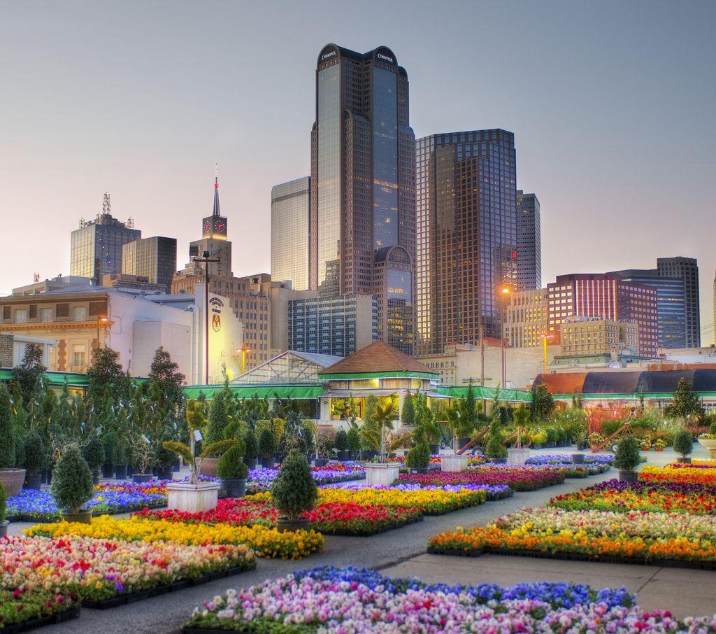 Downtown Dallas from the Flower Market | Dallas, Flower ...