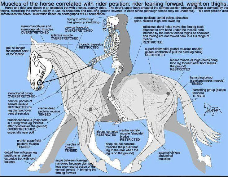 graphic on the balance between you and your horse