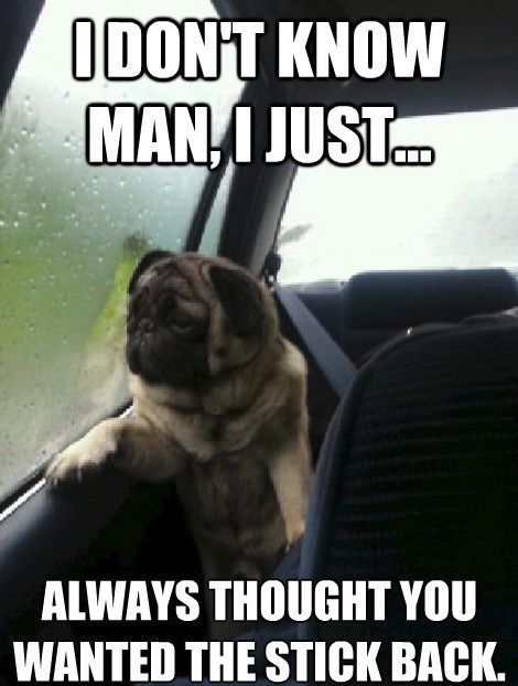 Pugs Archives Page 17 Of 18 Pug Meme Funny Cute Pugs Funny Dog Memes Funny Dog Pictures Pug Memes