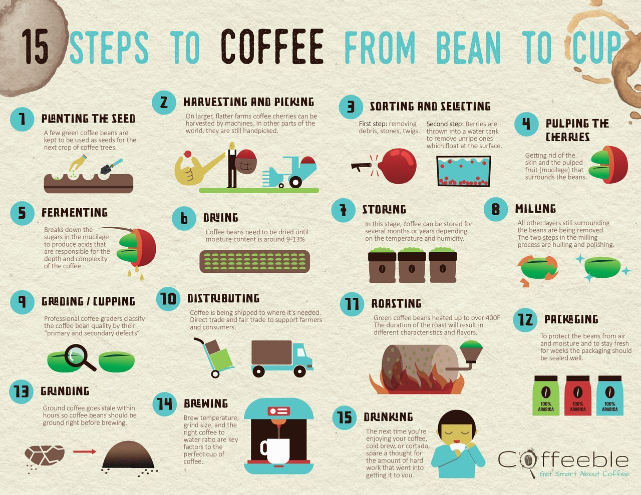 How Coffee Is Made 15 Steps From Seed To Cup Coffee Process Coffee Beans Coffee Infographic
