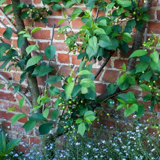 Garden Maintenance Garden Jobs To Do In March March Gardening