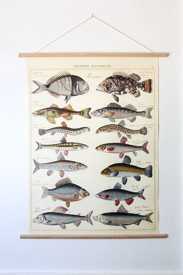 Tolle Fisch Framing Ideen - Bilderrahmen Ideen - szurop.info