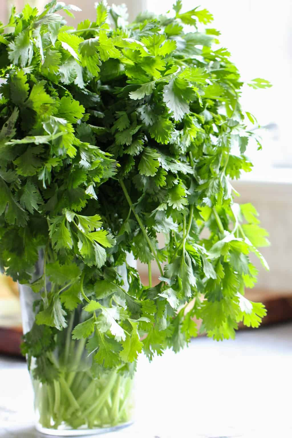 Fresh cilantro how to prep store ministry of curry