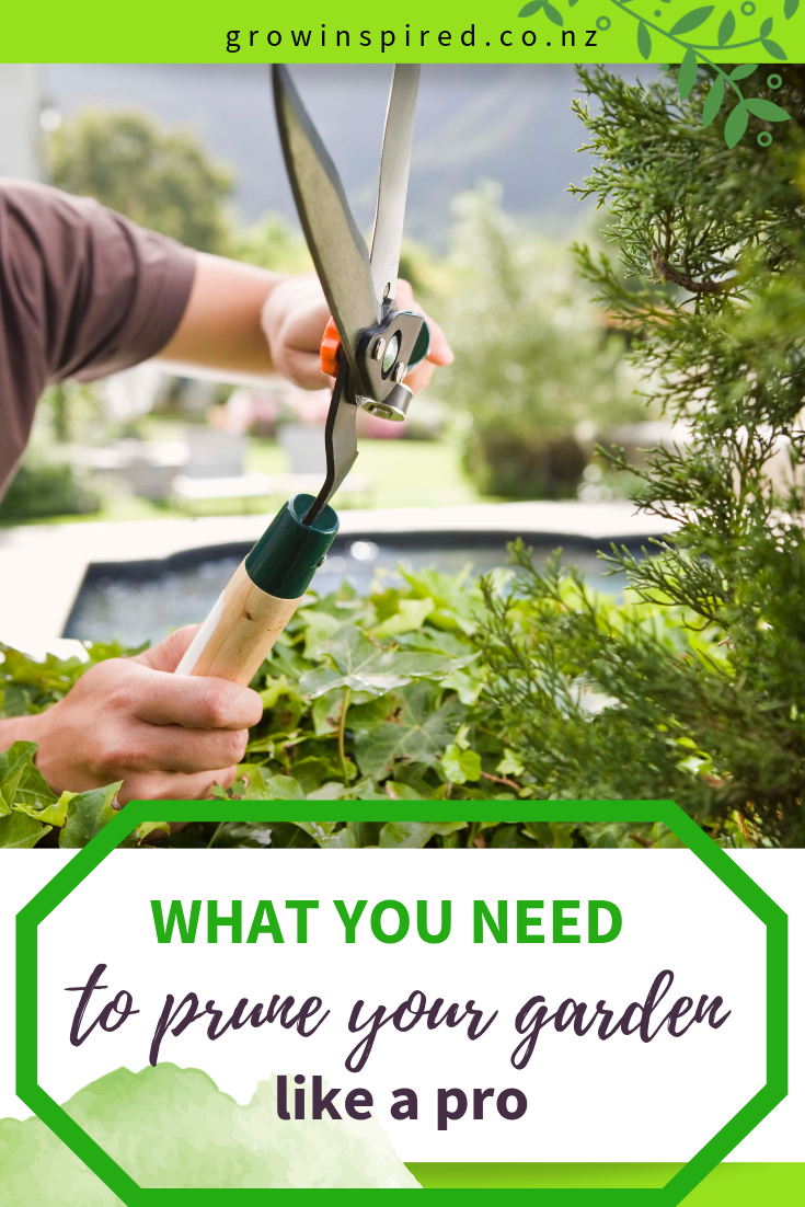 With The Pruning Season And Winter Dormancy Of Most Fruit Trees Approaching Now Is The Time To Get Prepared To Prune Prun Prune Fruit Trees Gardening Advice