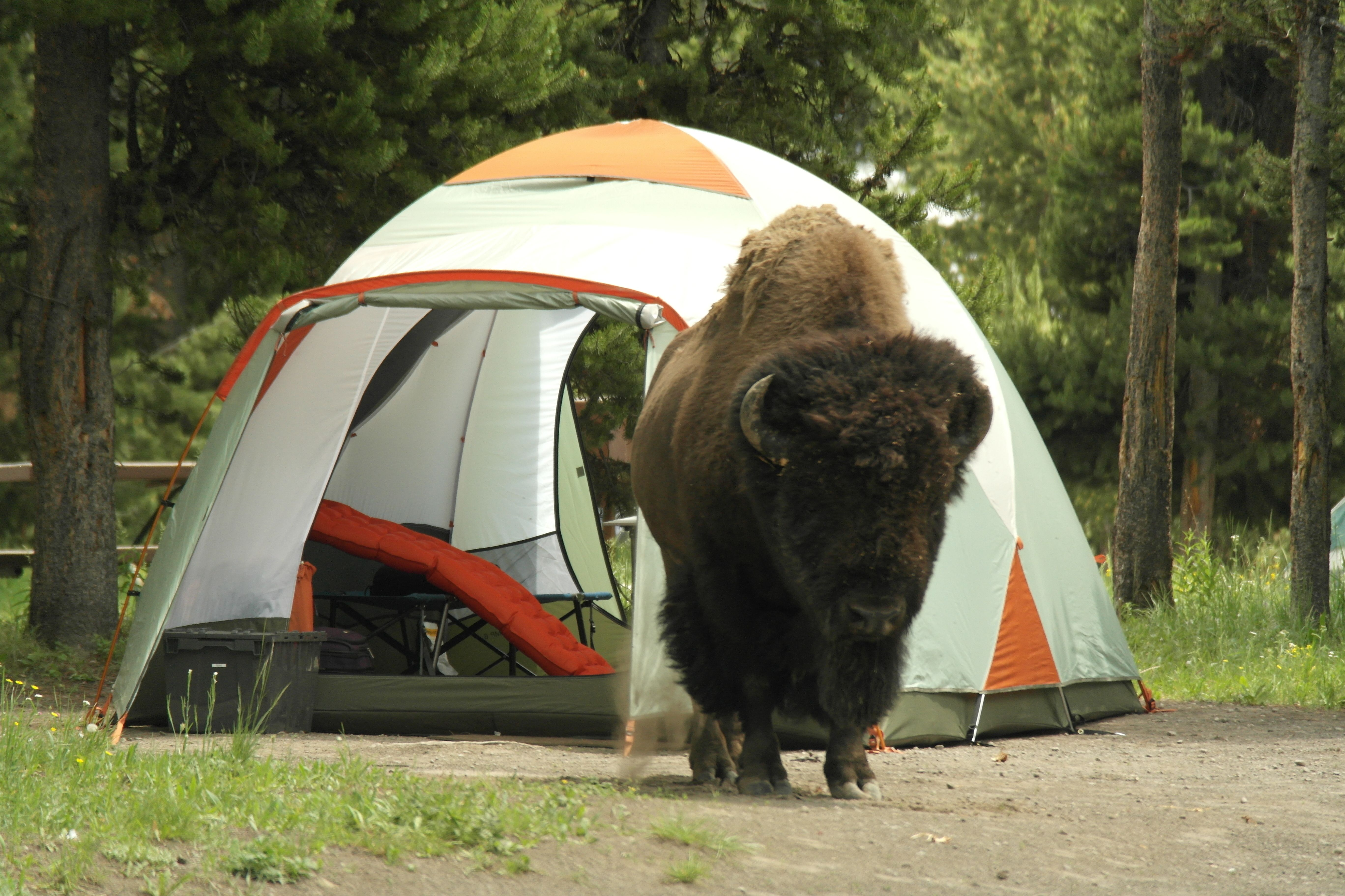 base camp 6 rei tent Google Search