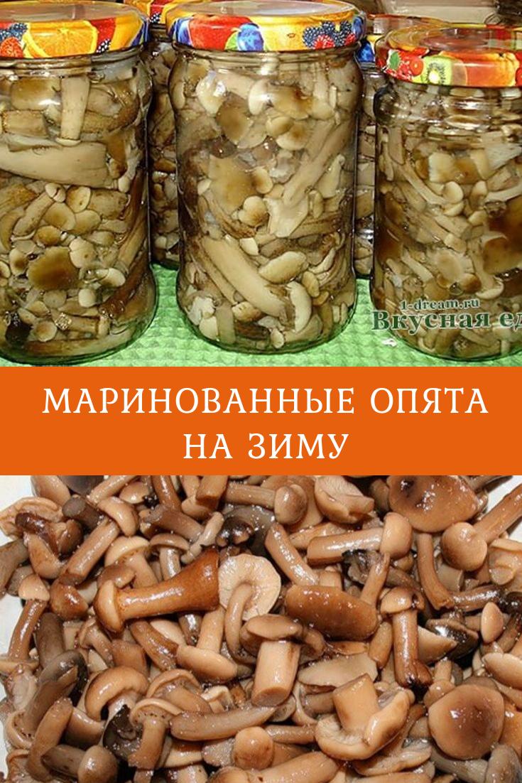 опята грибы заготовка на зиму рецепты