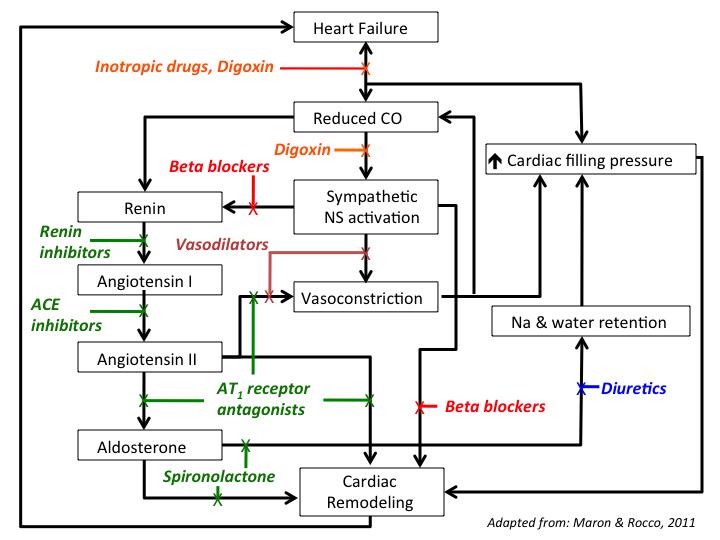 Body S Natural Defense Mechanisms