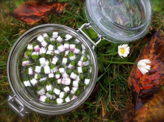 Domácí tinktura z květů sedmikrásek proti nachlazení | . . . 365 věcí, které si můžete udělat doma sami