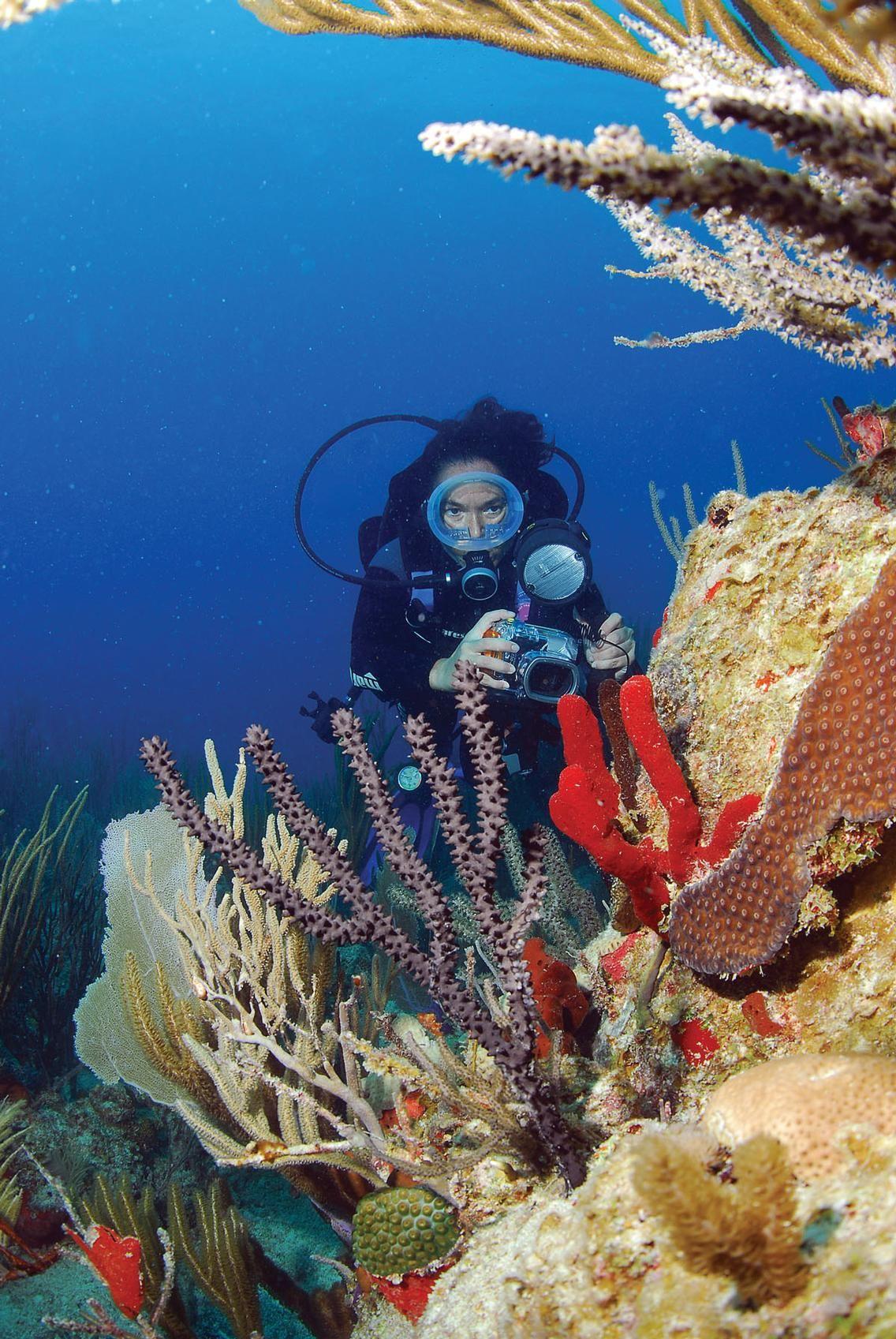 Scuba Diving In The British Virgin Islands