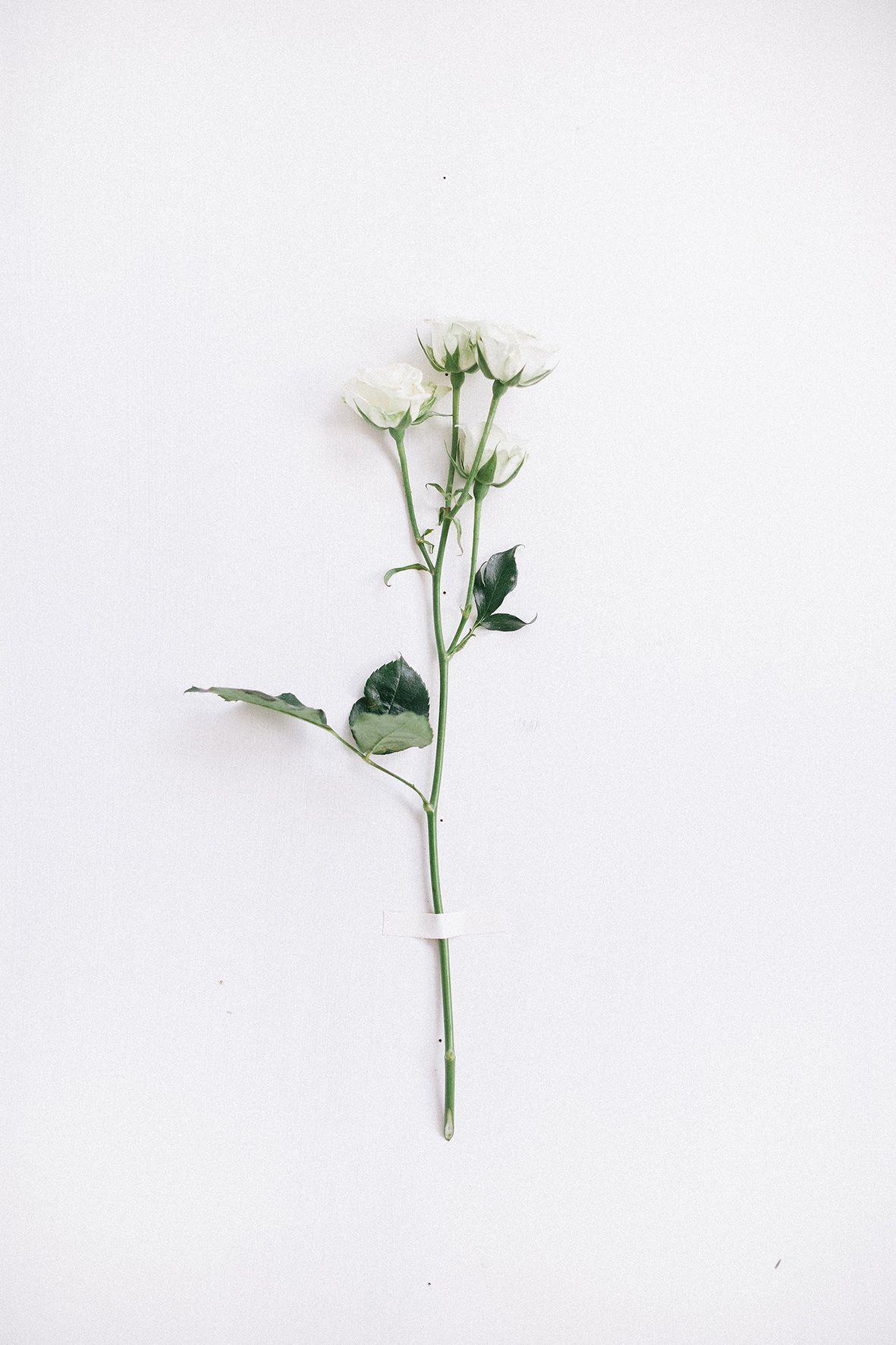 Spray Rose Artifical Flowers Simple Aesthetic Flower Wallpaper