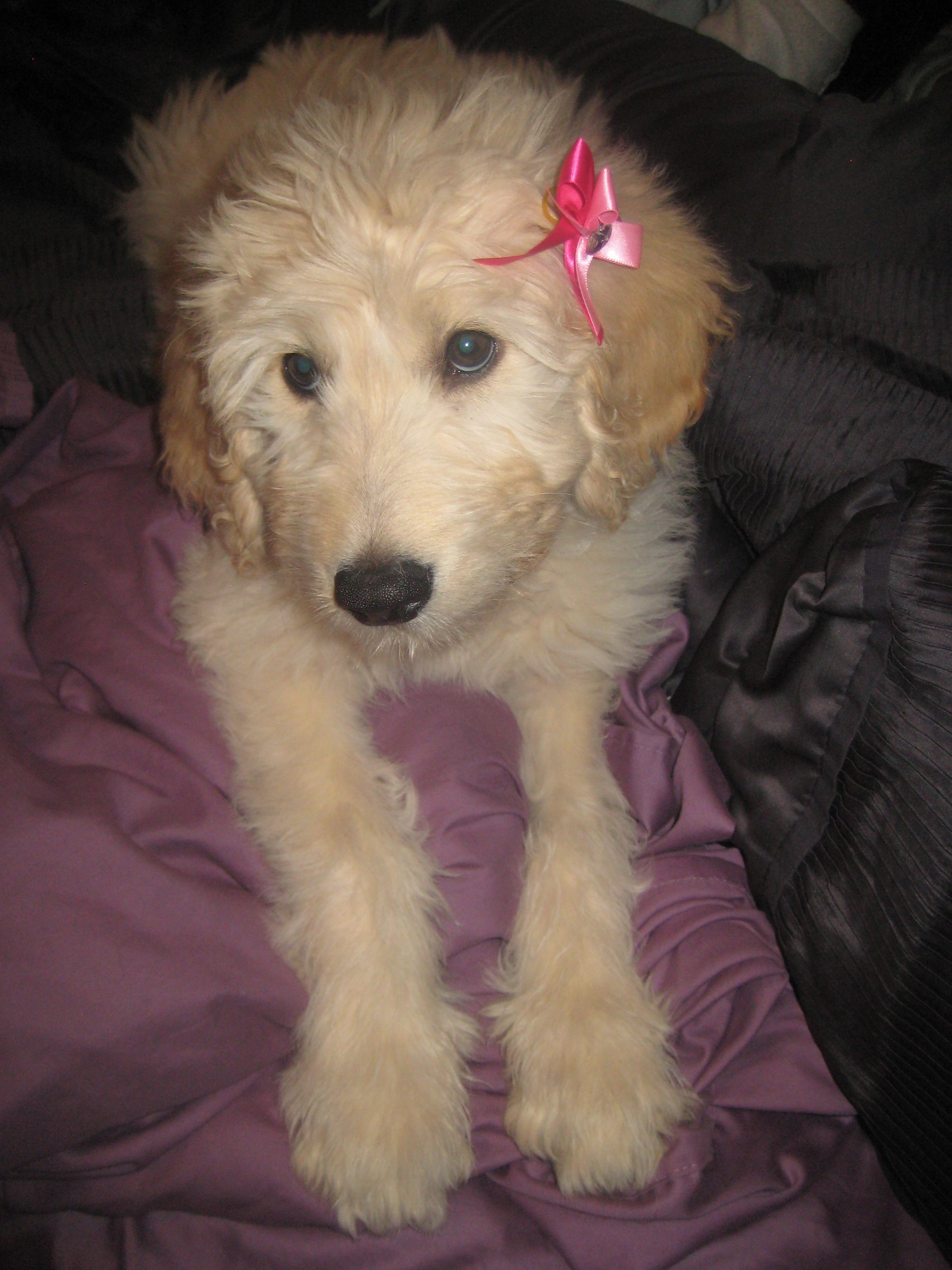 I'm so going to put a bow in my baby girl Sophie's hair!