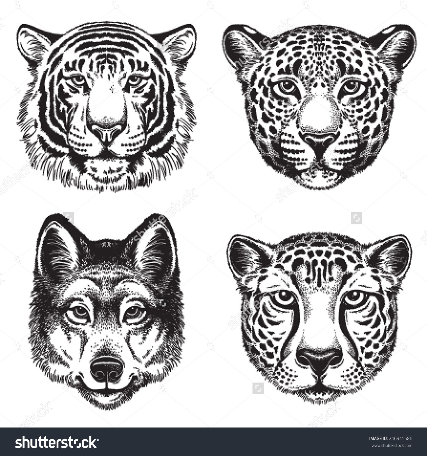 Black and white vector line drawings of wild animal faces cheetah leopard tiger and wolf