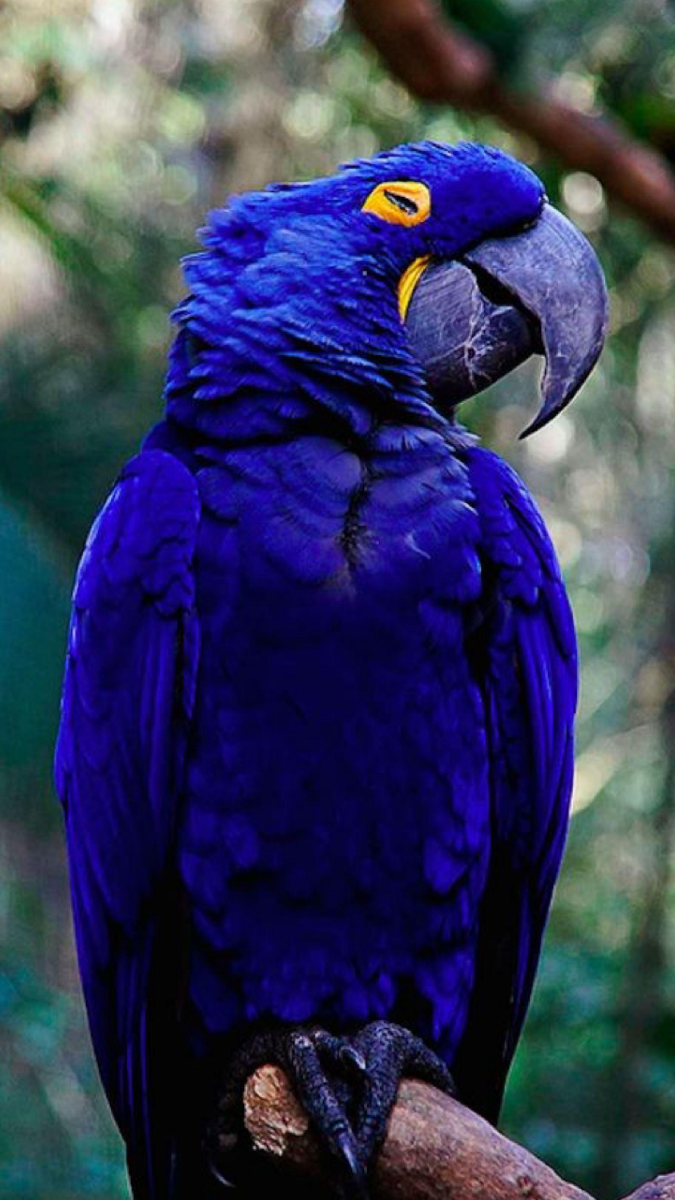 Pin de monica leccio en aves | Pinterest | Pájaro, Ave y Aves exóticas