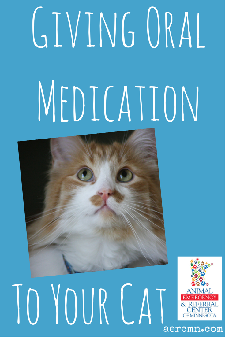 Giving oral medication to a cat Cat medication, City
