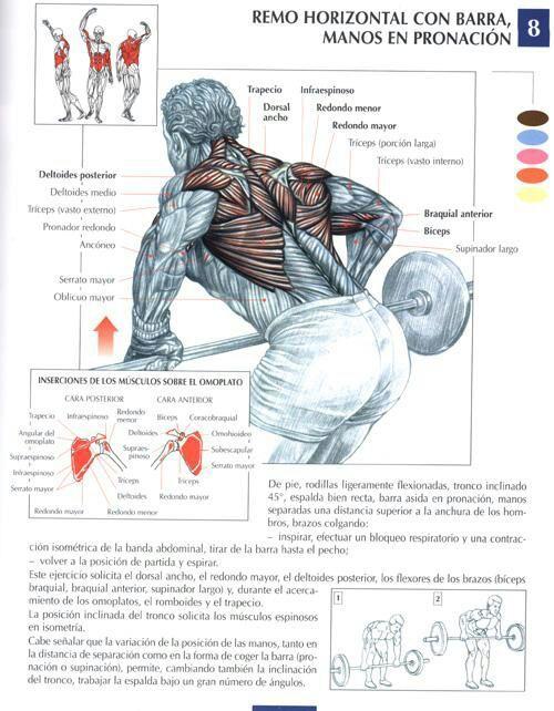 musculos que se trabajan con remo sentado